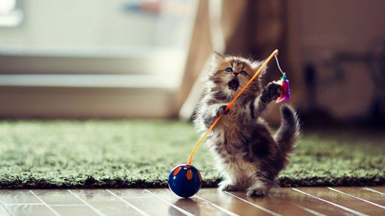 игра с котенком