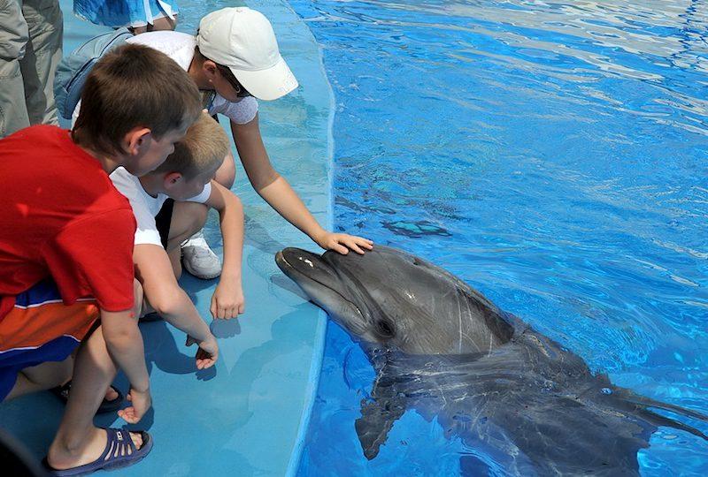 дельфинарий в Питере