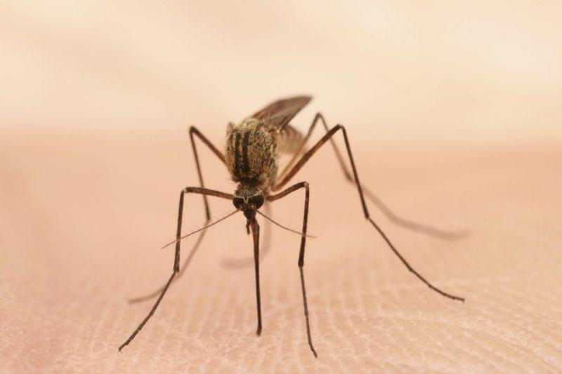 опасность комаров
