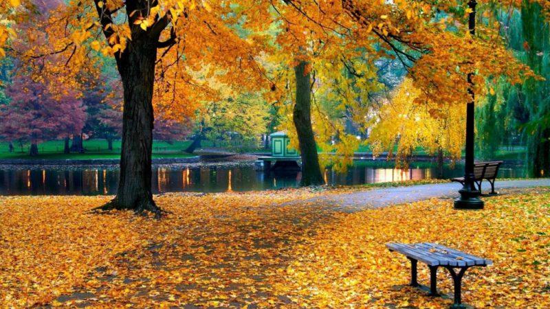 осень - время года