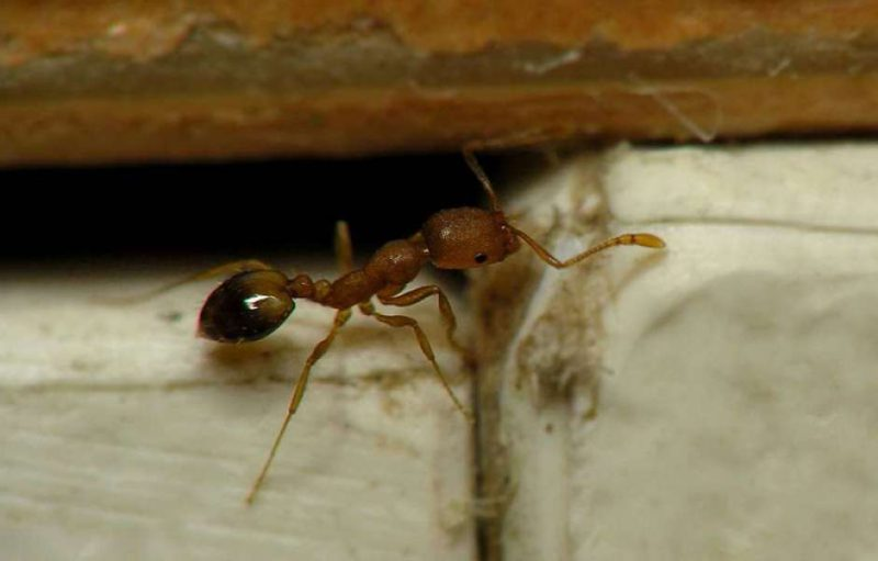 Избавляемся от насекомых в квартире