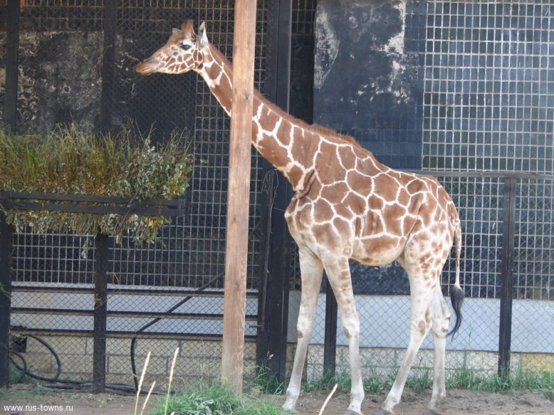 зоопарк для ребенка