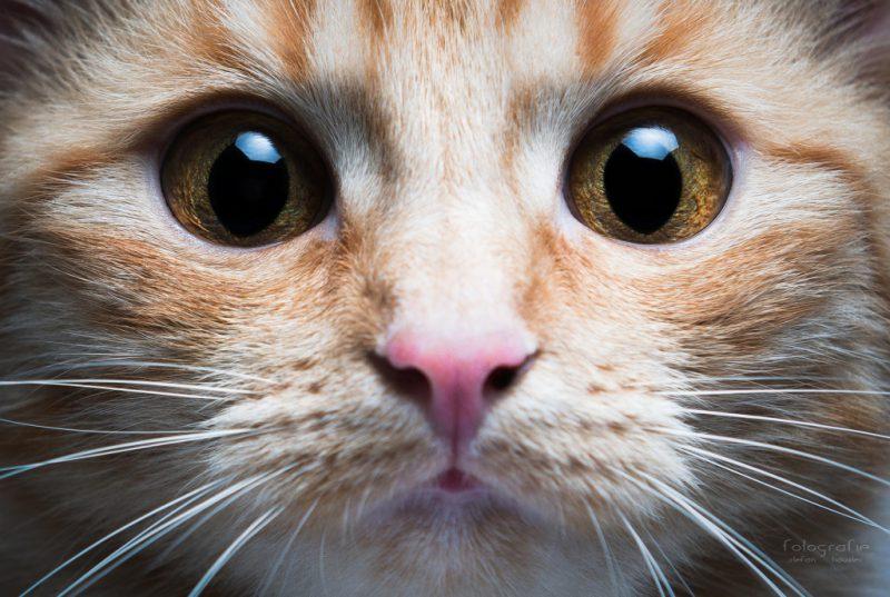 зачем смотреть кошке в глаза