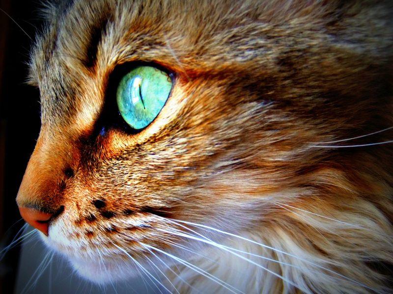 мистика о глазах котов