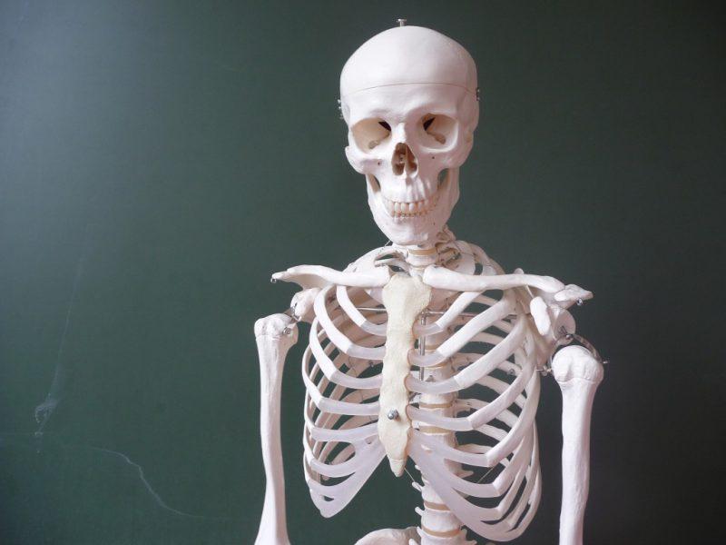 кости на муляже