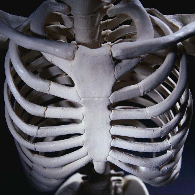 кости скелета