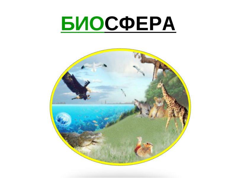Особенности биосферы