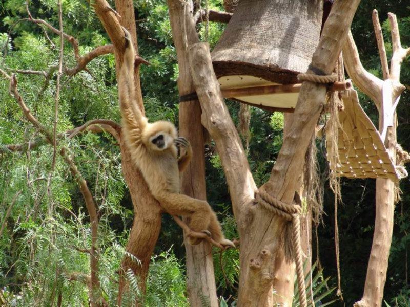 обезьяний питомник