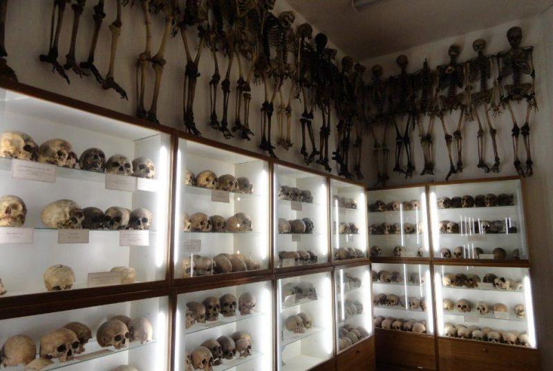 анатомический музей театр