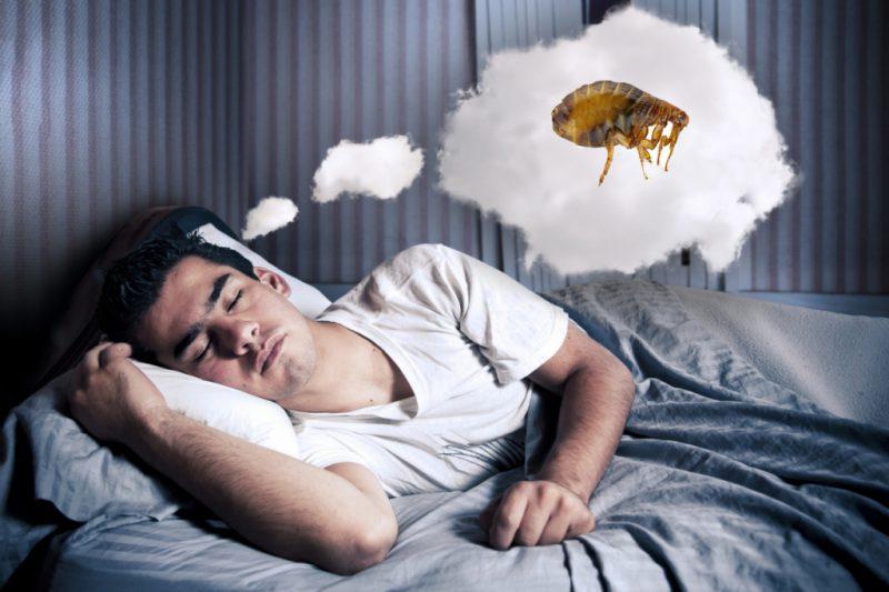 блохи во сне