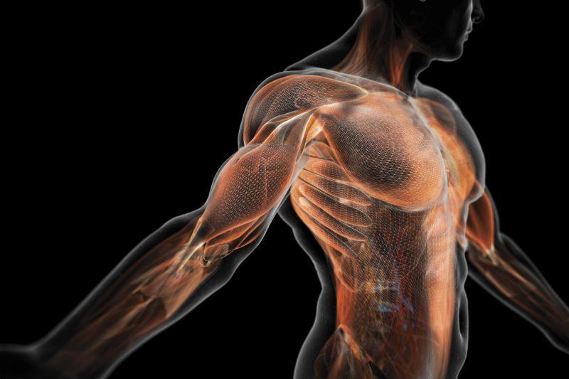 энергия мышц