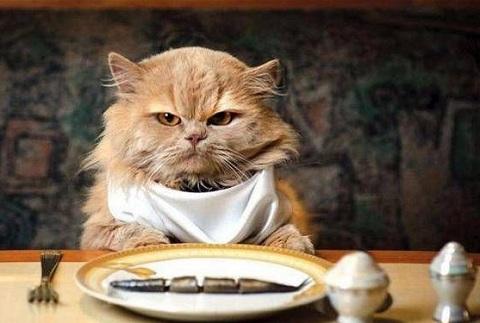 Правильное питание кошки.