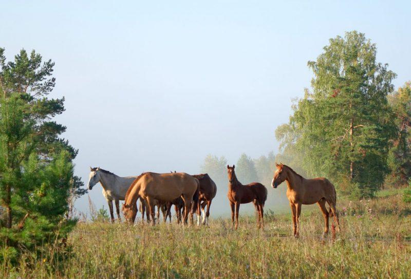 Приснились  лошади