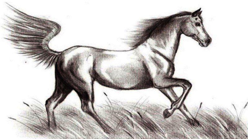 kak-narisovat-loshad-karandashom-poe`tapno-800x450 Как нарисовать настоящую лошадь карандашом поэтапно для начинающих и детей? Как нарисовать красиво морду, гриву лошади, бегущую, стоящую лошадь, в прыжке?