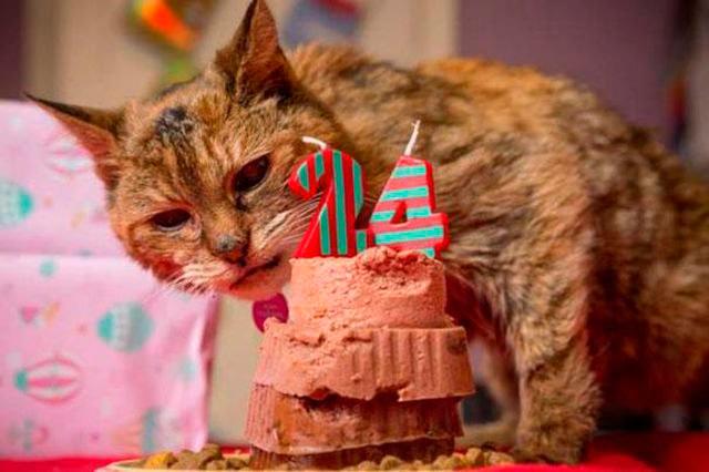 Кошка-долгожитель «Поппи», прожила 24 года.