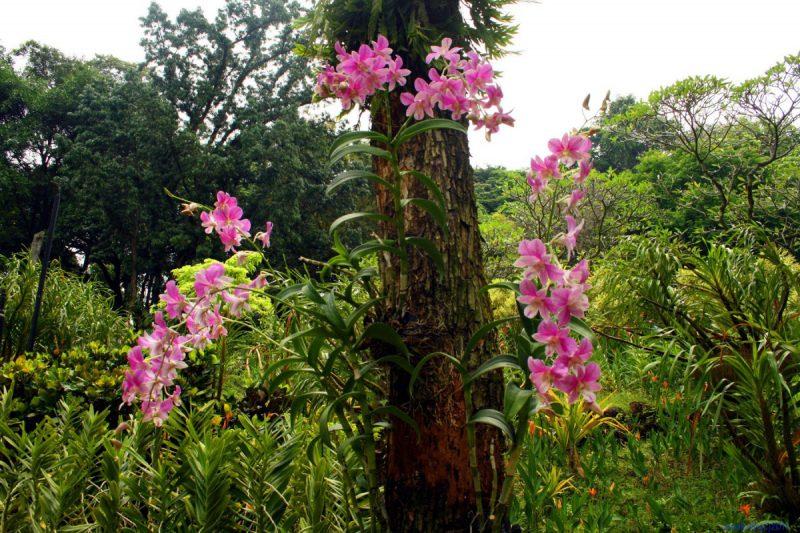Орхидея в диких условиях