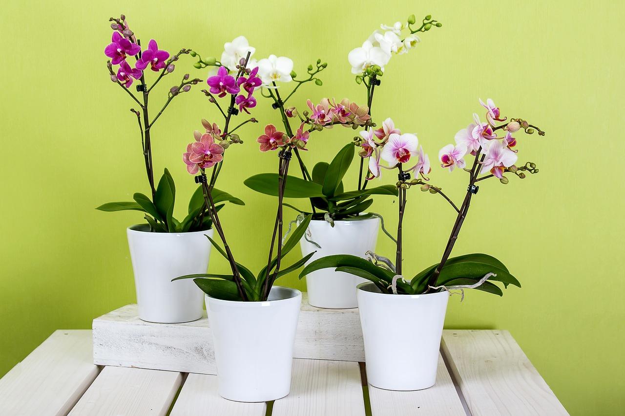 при орхидеи фото красивые картинки в горшках мавзолея