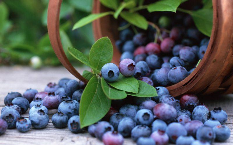 Голубика - в чем польза ягоды?
