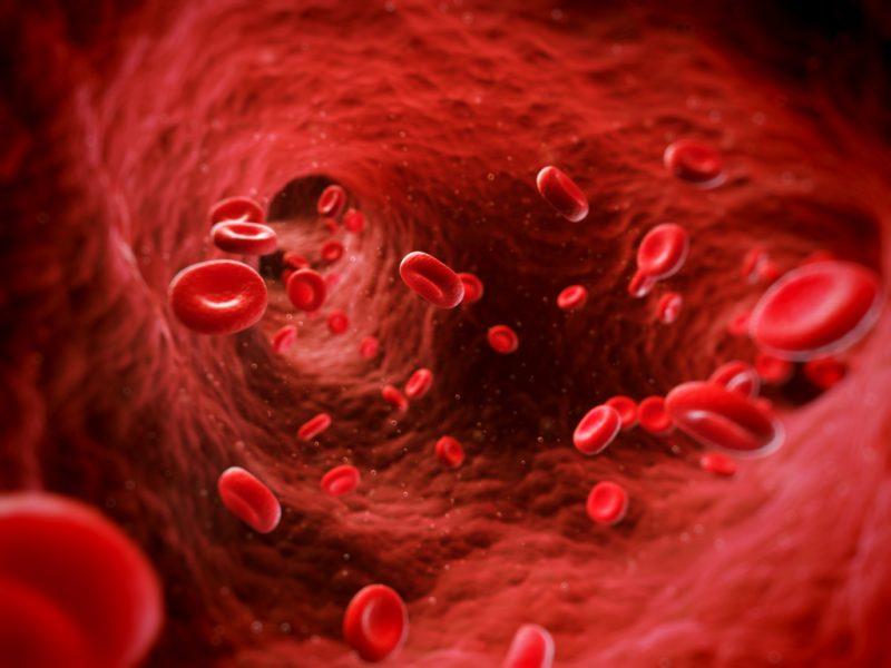 Что такое кровь и какое ее количество?