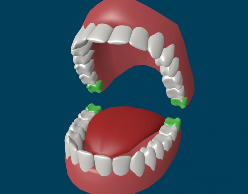 Сколько у человека зубов