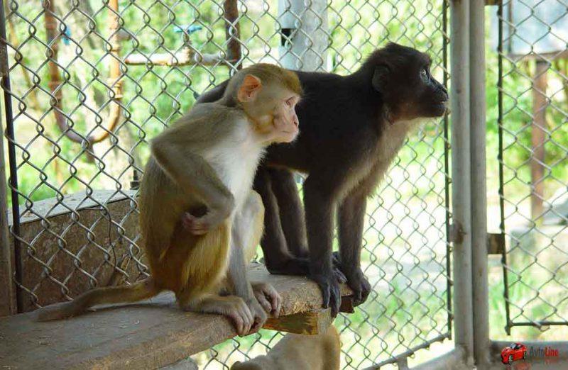 обезьяний питомник Адлера