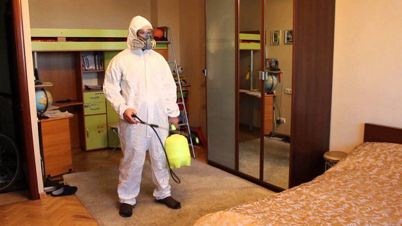 Этапы избавления от блох в квартире