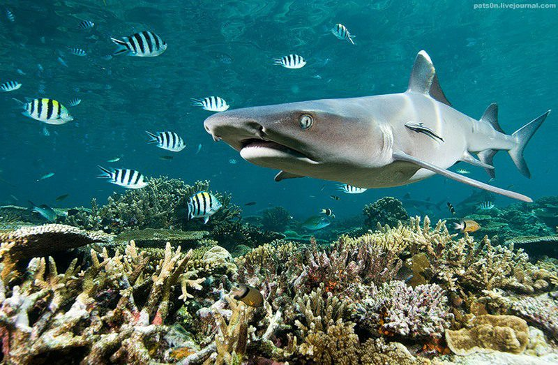 Фауна Тихого океана