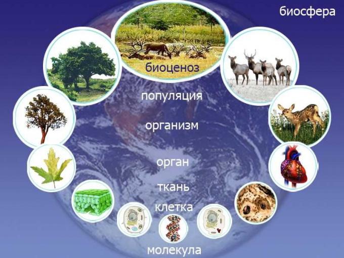 что такое биосистема