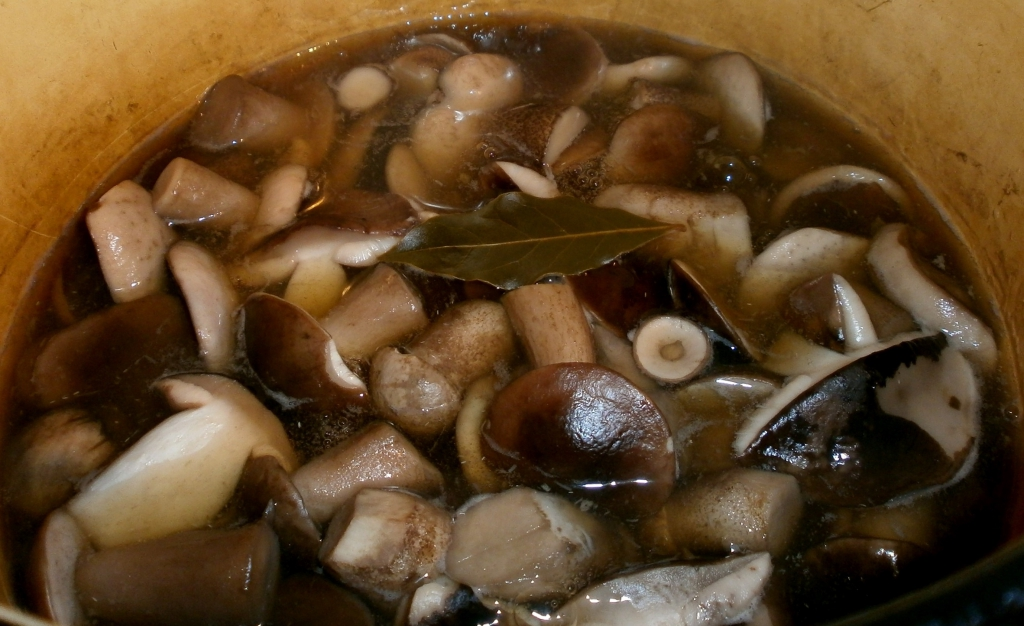 как нужно варить грибы