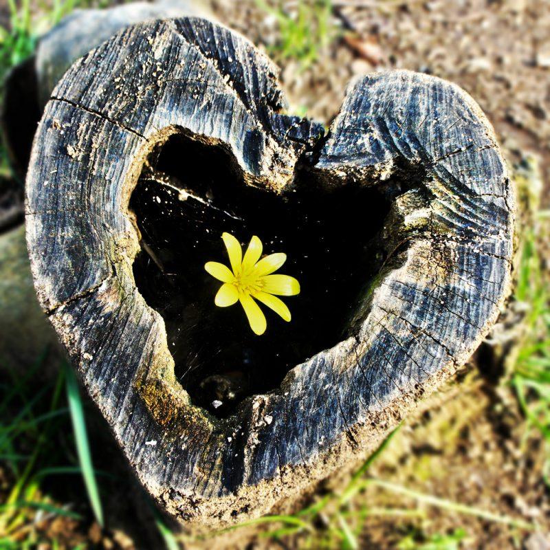 Сердечки в природе