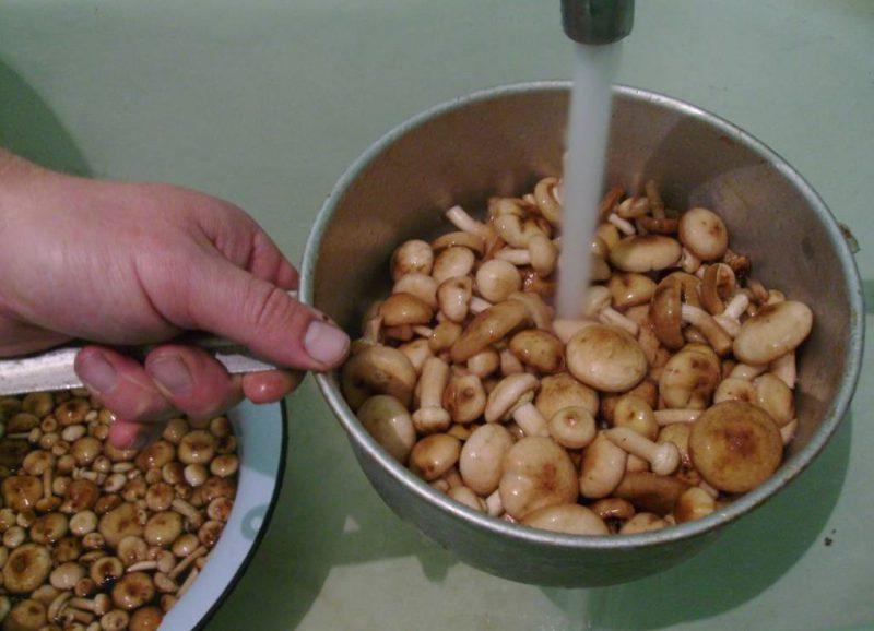 Варим свежие грибы