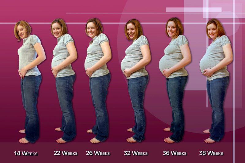 Сколько месяцев в 24 неделях?