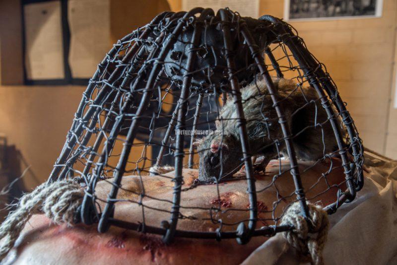 Пытки крысами