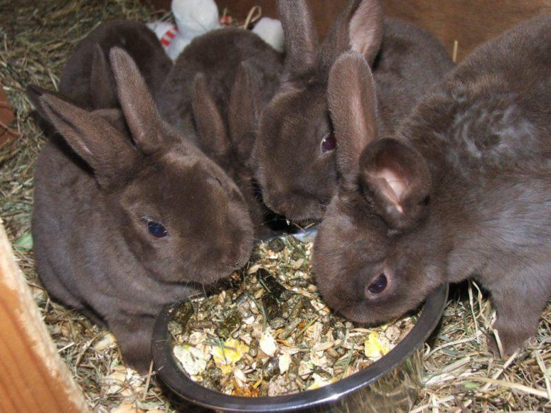 Питание кроля в зимний период