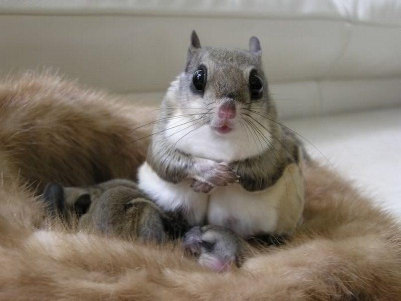 Самые милые картинки про животных
