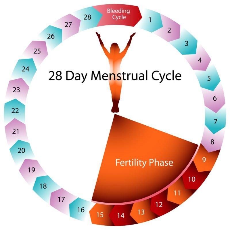 Беременность перед месячными
