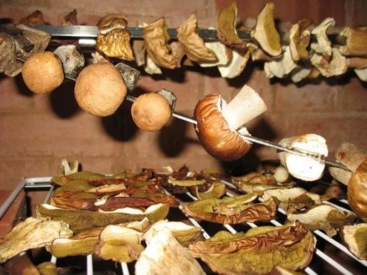 Способ отварить сушеные грибы