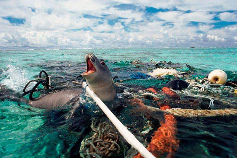 Экология Тихого океана