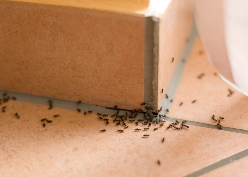 Особенности борьбы с ненавистными насекомыми