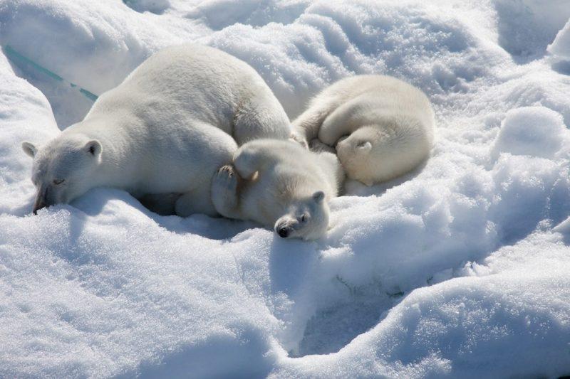 Животный мир Северного Ледовитого океана
