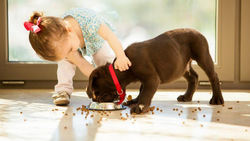 Сухой корм и щенок