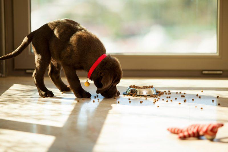 Полезный корм для собак