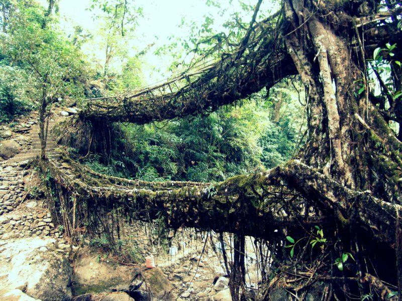 Черрапунджи древний мост