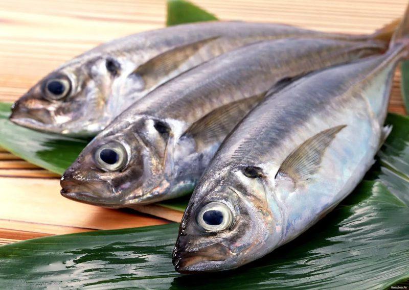 Самая вкусная рыба в мире. Отличие морской и речной рыбы.