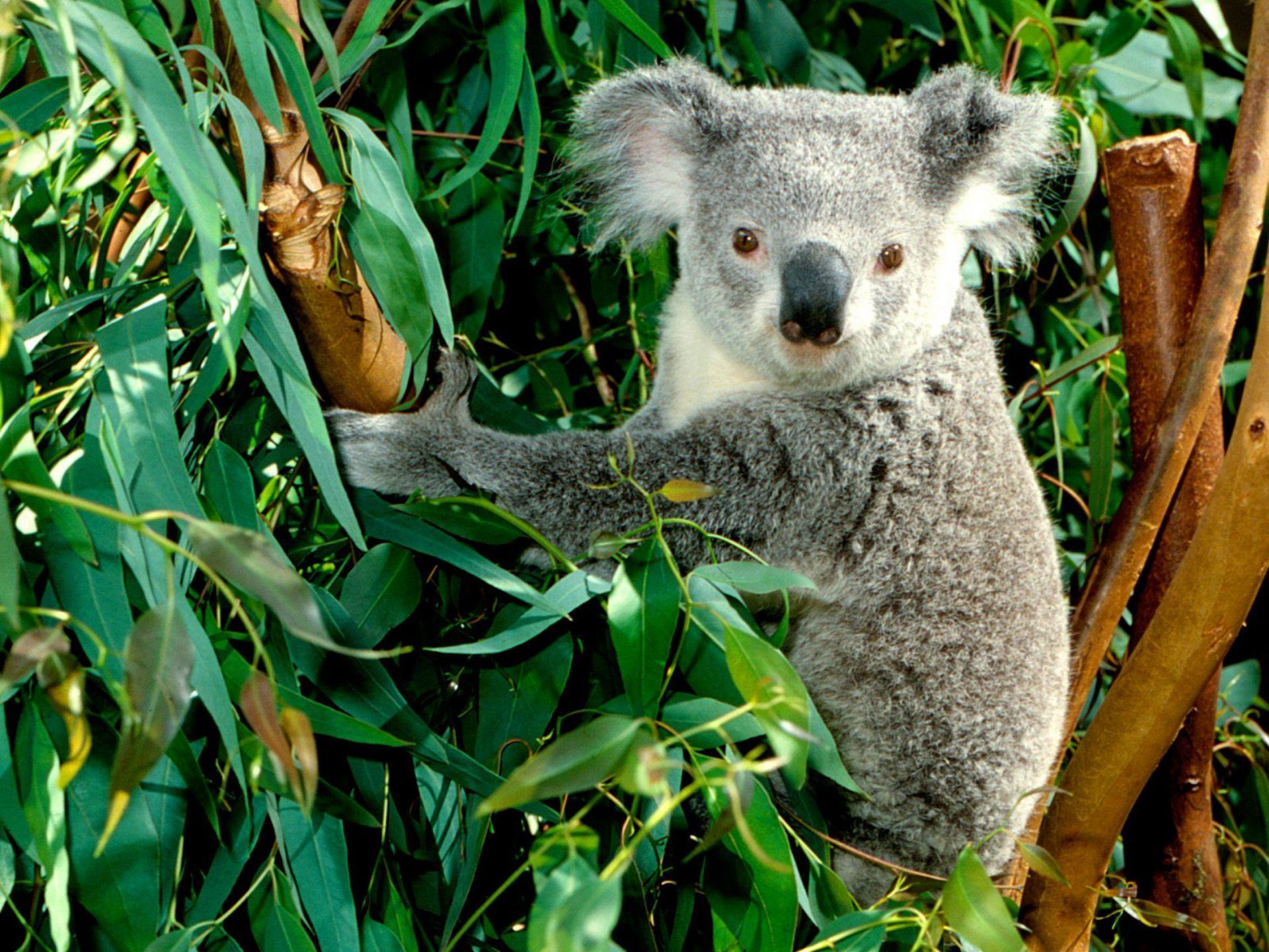 согласитесь, временем австралийские животные фото с названиями одной