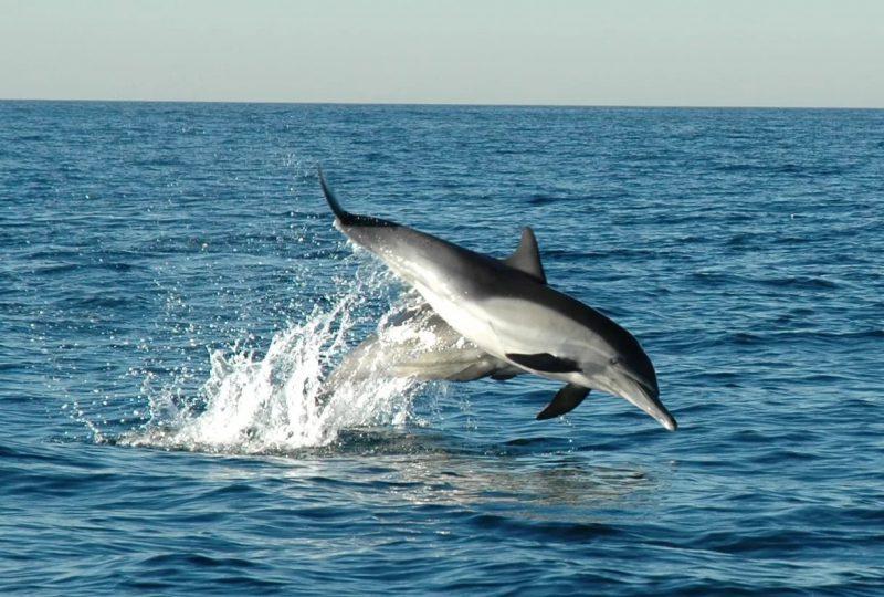 Растительность и животный мир Азовского моря