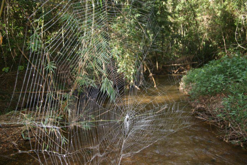 Паутина паука Дарвина