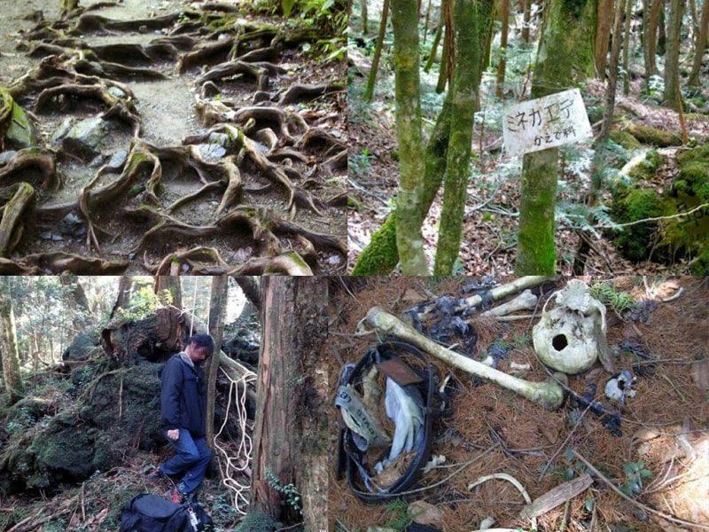 Лес, который забрал жизни 500 людей за последнее шестидесятилетие