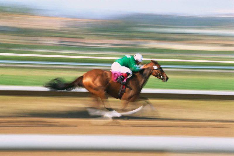 самая быстрая лошадь в мире