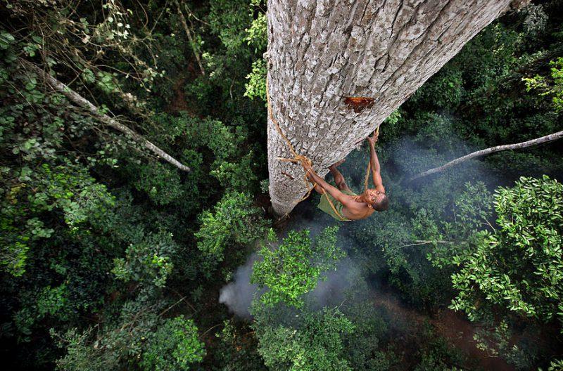 Пигмей взбирается на дерево